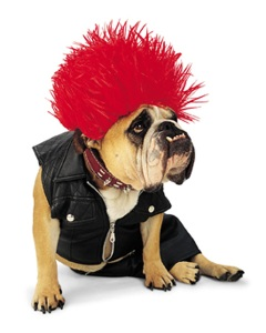 Punk Rock Bulldog