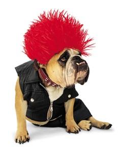 Punk Rock Bulldog