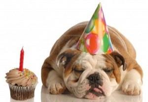 sleeping dog, sleepy dog, dog, english bulldog, bulldog, cup cake, birthday, cute, funny